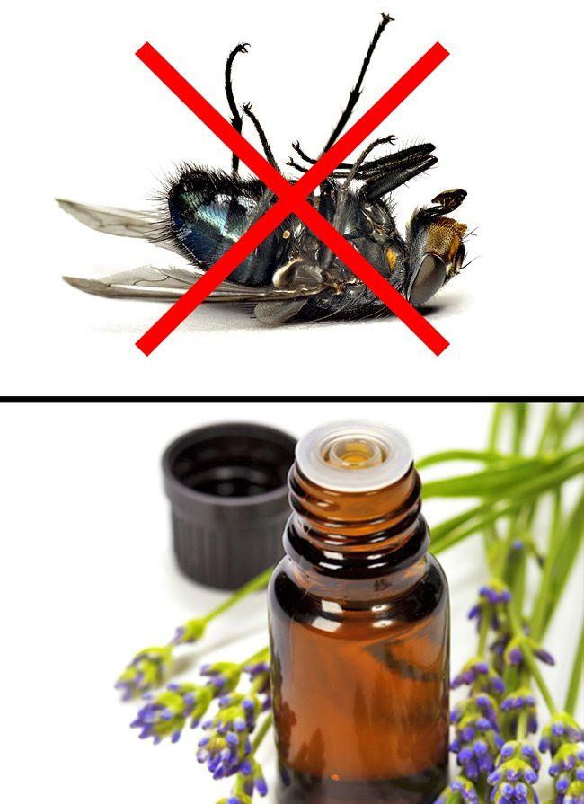 Đánh bay côn trùng nhà bạn bằng những tuyệt chiêu đơn giản